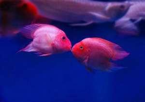 观赏型活鱼运输技巧小册子